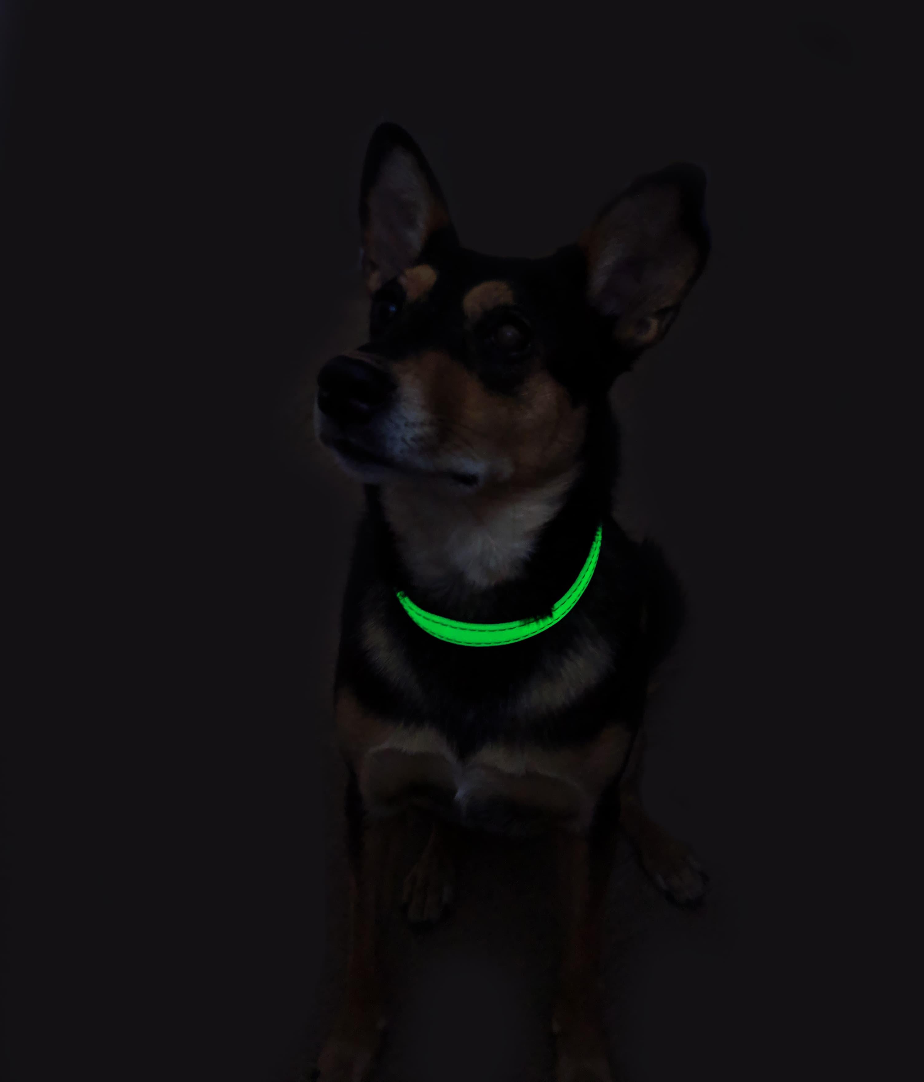 UV Glow Pet Dog Collar Large
